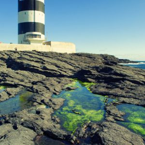 Bill Murphy | Hook Head