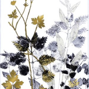 Yanny Petters – Hedgerow Silhouettes with Buttercup and Herb-Robert